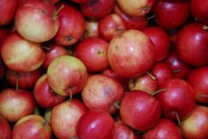 00 Apples