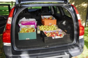 01 First apples loaded into the car